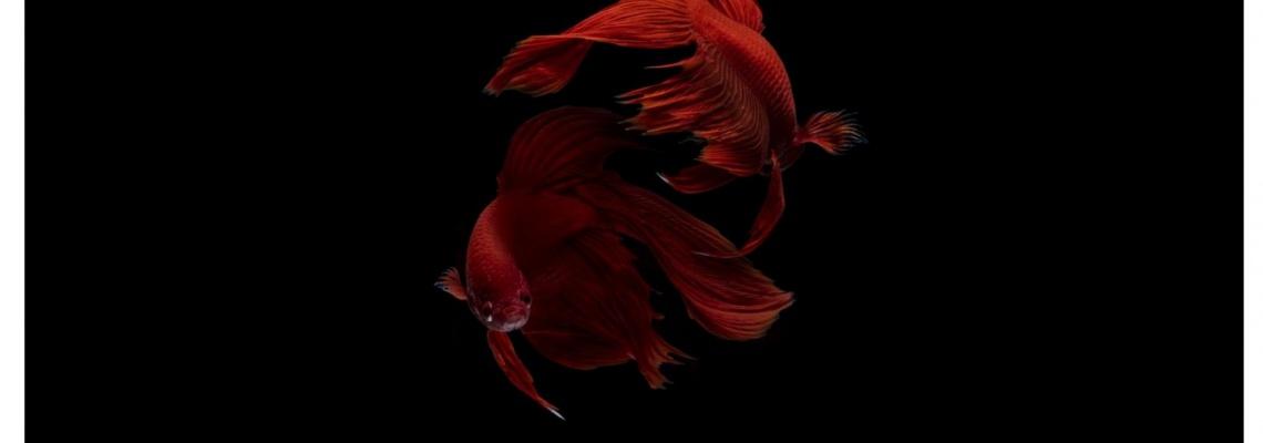 ترنزیت مارس در نشان ماهی، زمان تغییرهای درونی است. نبردهای درونی شما حالا برگشتی شدن ونوس روی لایه احساسی، عمق و شدت بیشتری پیدا میکنند. ترنزیت مارس در یکنشان حدود ششهفته طول میکش